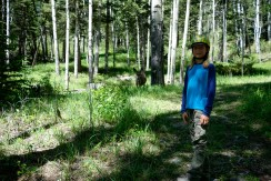 The deer weren't very afraid of Tadhg.